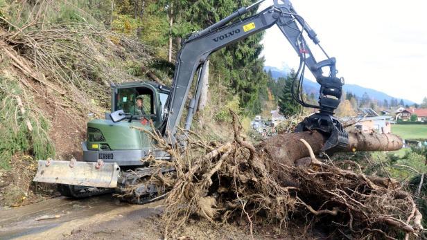 Holzpreis Bedroht Existenzen Der Waldbauern Kurierat
