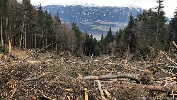 Orkane, Stürme, aber auch der Mensch zerstören große Flächen Wald