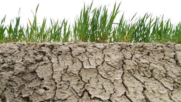 Beratungen zu IPCC-Sonderbericht zur Nutzung der Landflächen gestartet