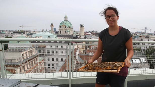 KOŠNICE U PARKOVIMA!  Beč – evropska prijestolnica pčela!