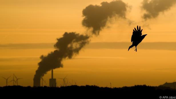 Kohle wird derzeit so gut wie gar nicht besteuert