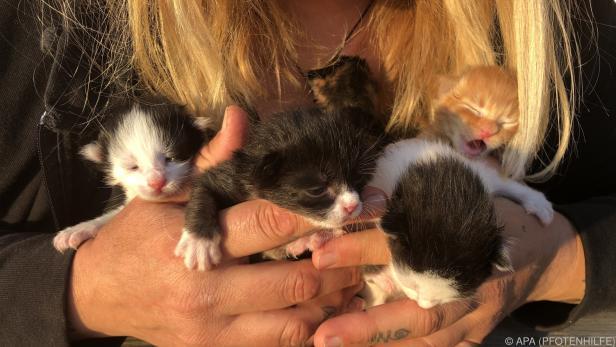 Die Kätzchen werden mit der Flasche aufgezogen