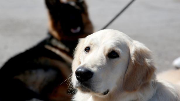 Dog show in Kyrgyzstan