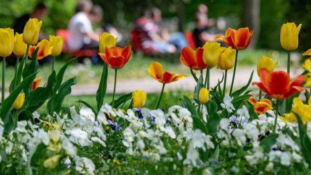 Blumen für gutes Benehmen? Die neuen Coronaregeln lassen nach wie vor viele Fragen offen