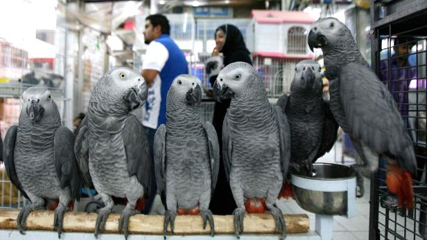 FILES-US-SCIENCE-PARROTS-GERMANY-ANIMALS
