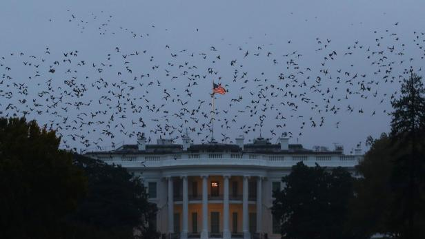 Starlings fly in a murmuration over the White House in Washington