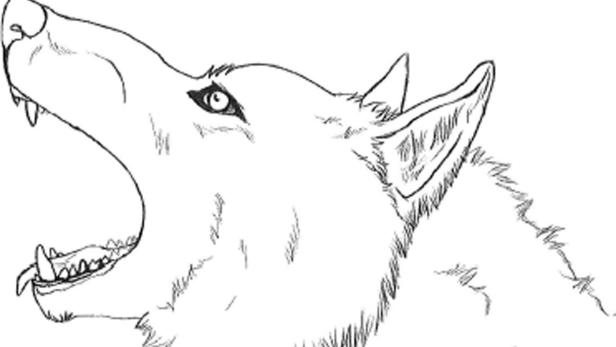 """Ein Wolfskopf, gezeichnet vom Autor des Corona-""""Märchens"""""""