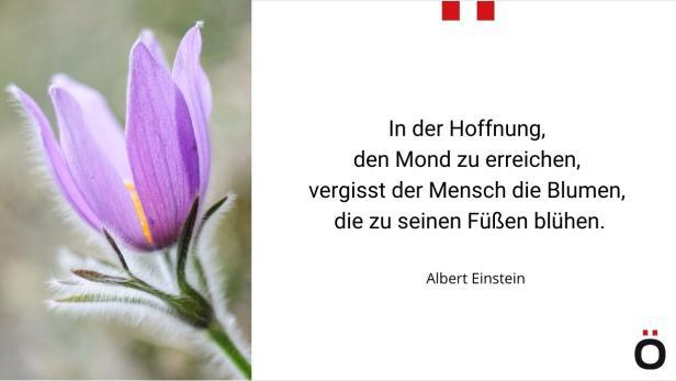 In der Hoffnung den Mond zu erreichen, vergisst der Mensch die Blumen, die zu seinen Füßen blühen.