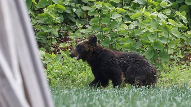 JAPAN-ANIMAL-BEAR