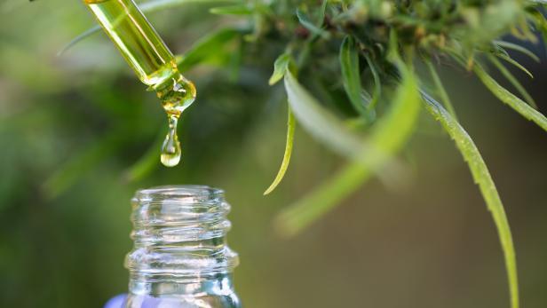 CBD hemp oil, Hand holding bottle of Cannabis oil in pipette