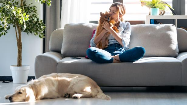 Attractive young woman kissing her little cute dog while sitting in couch with her dogs and cat in living room at home.