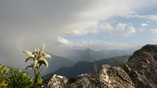 Edelweiss and thunderstorms in the Alps