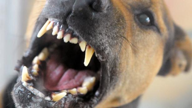 Mehr als 500 Menschen durch Hundebisse in Berlin verletzt