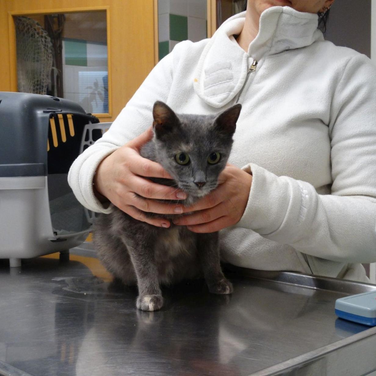 """Trächtige Katze gerettet: """"Emma"""" erholt sich im Tierschutzhaus"""