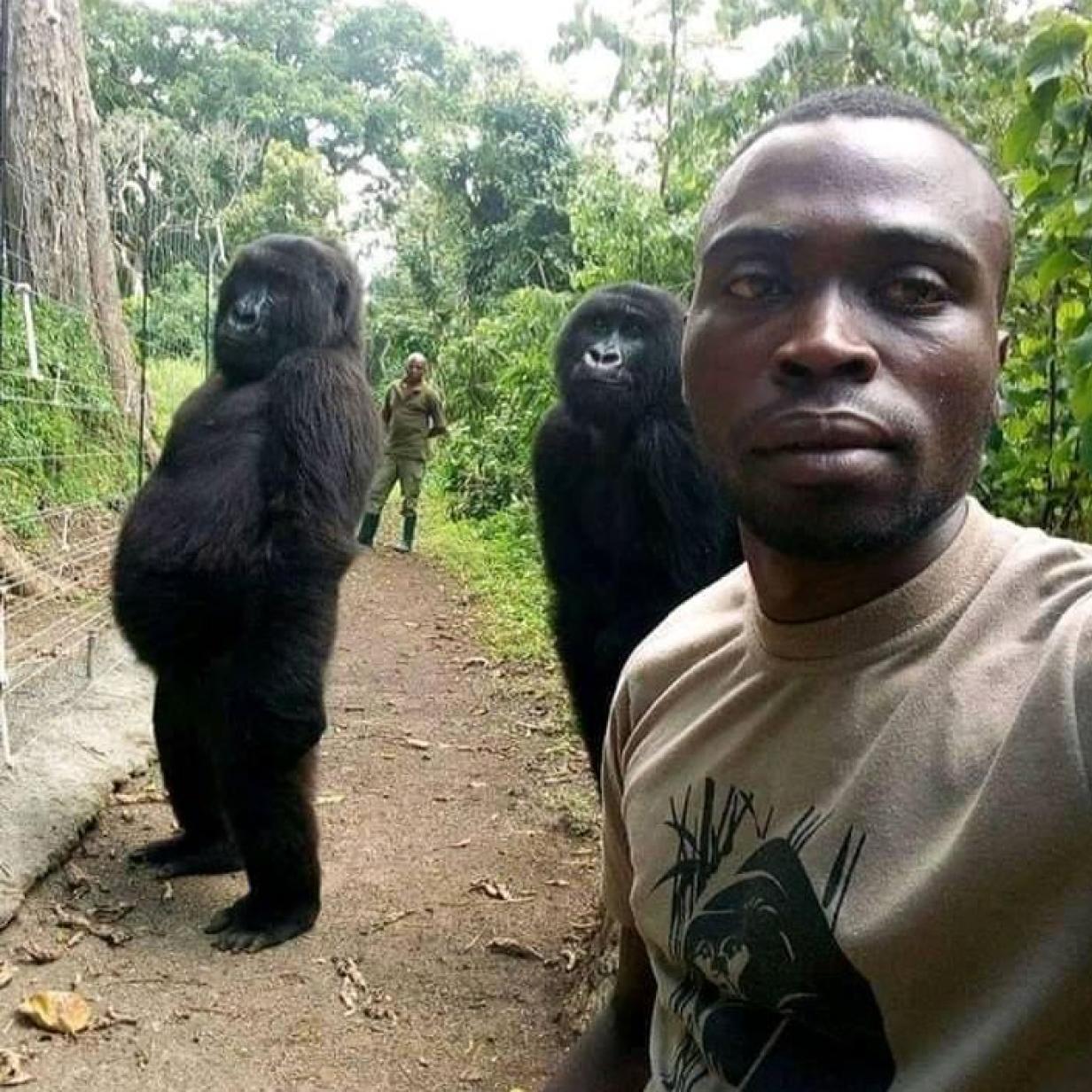 Viraler Gorilla-Schnappschuss: Hier posieren Primaten mit Rangern
