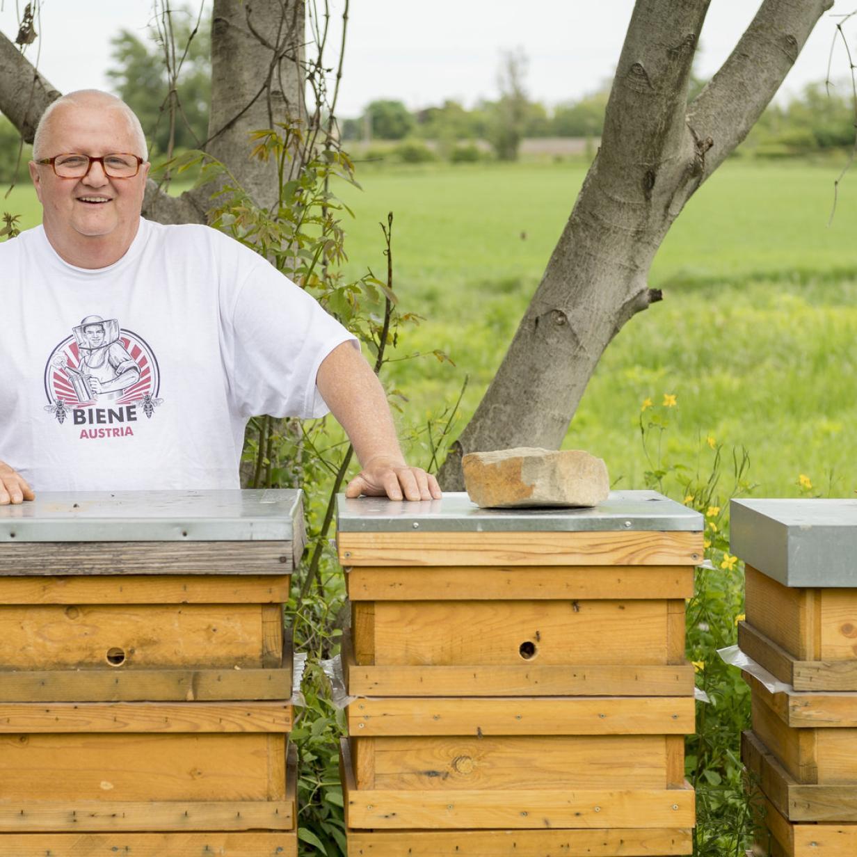 Ein Wiener Erfolgsgeheimnis: Bienen, die nicht stechen
