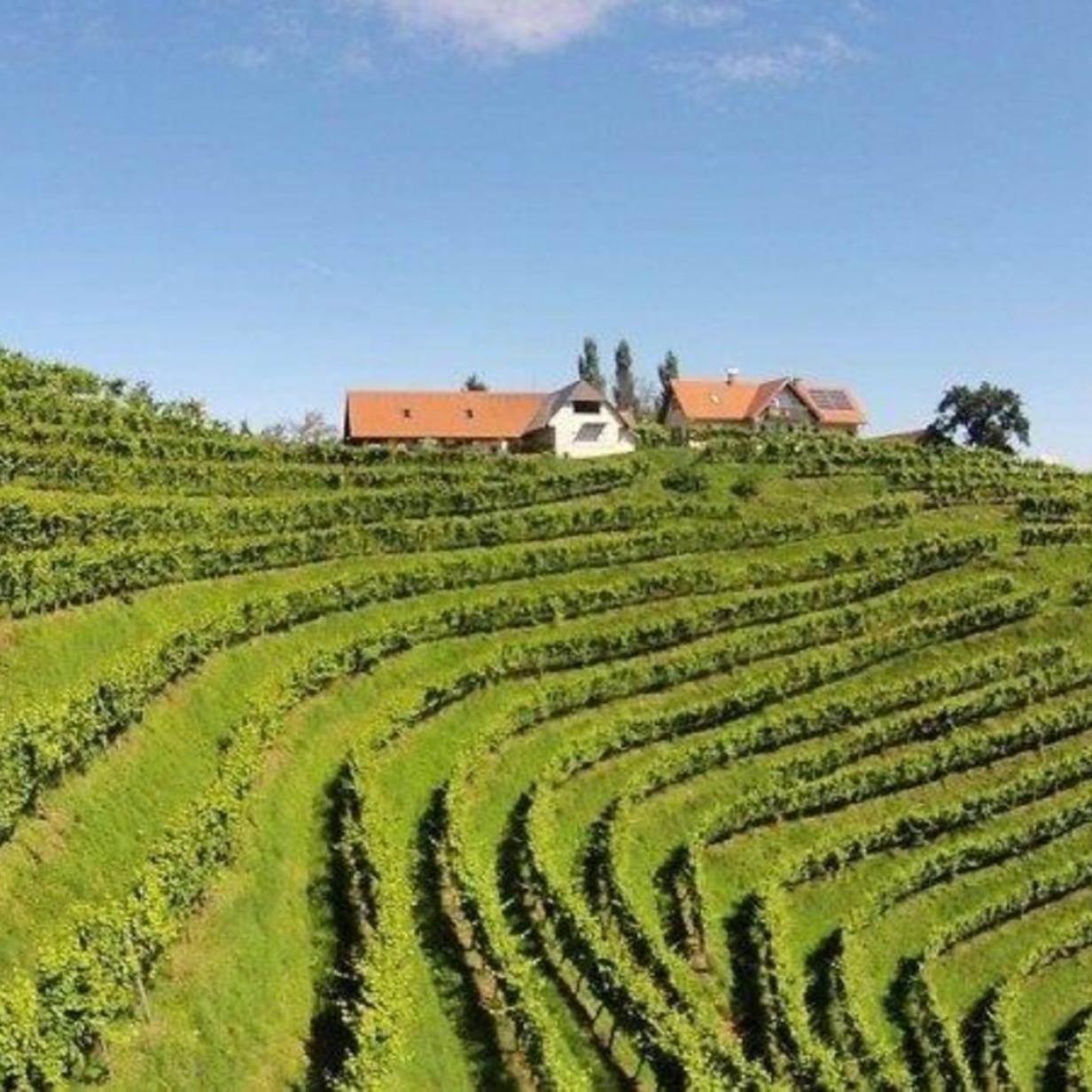 Wie der Riesling in die Steiermark kam