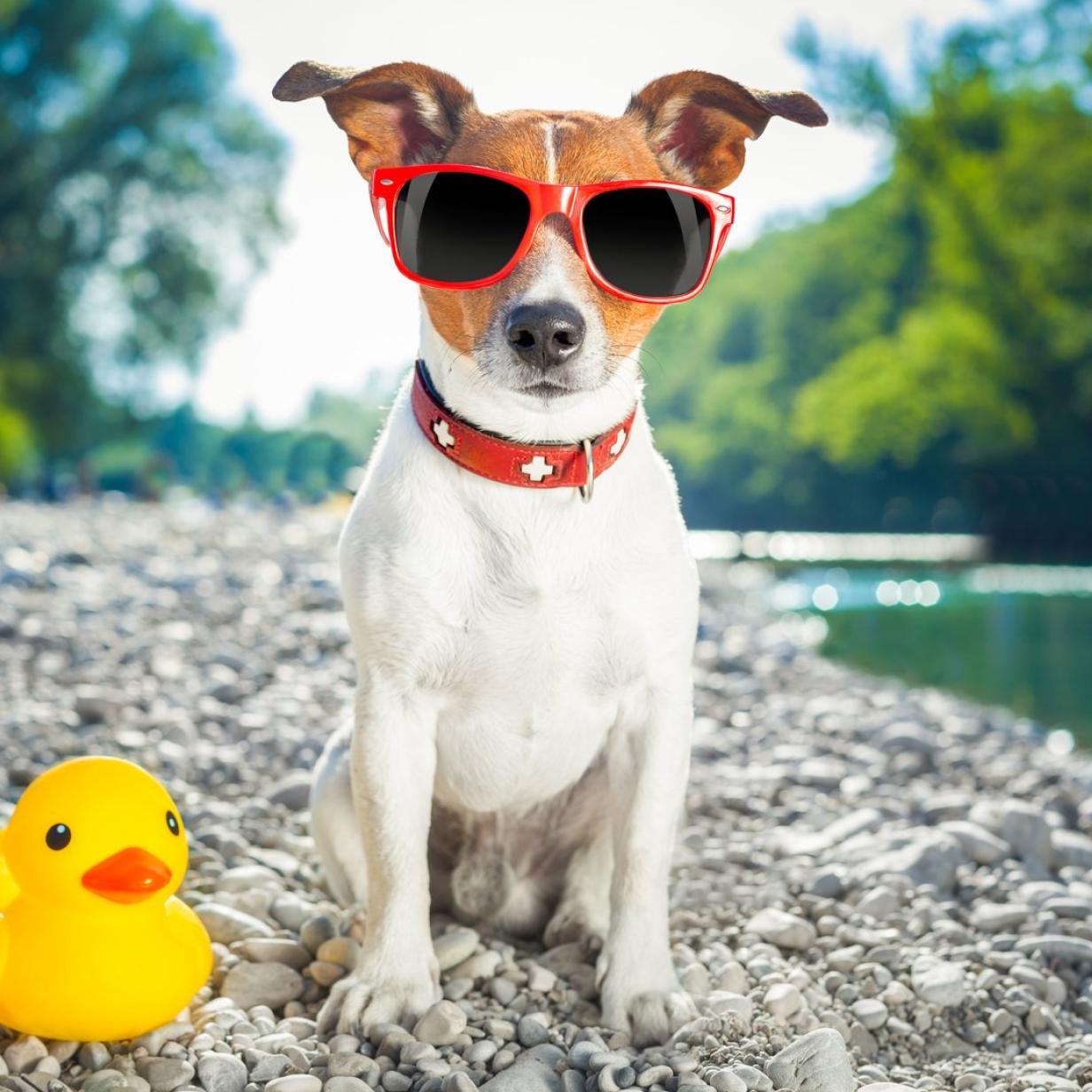 Wo und wie Urlaub mit Hund Spaß macht
