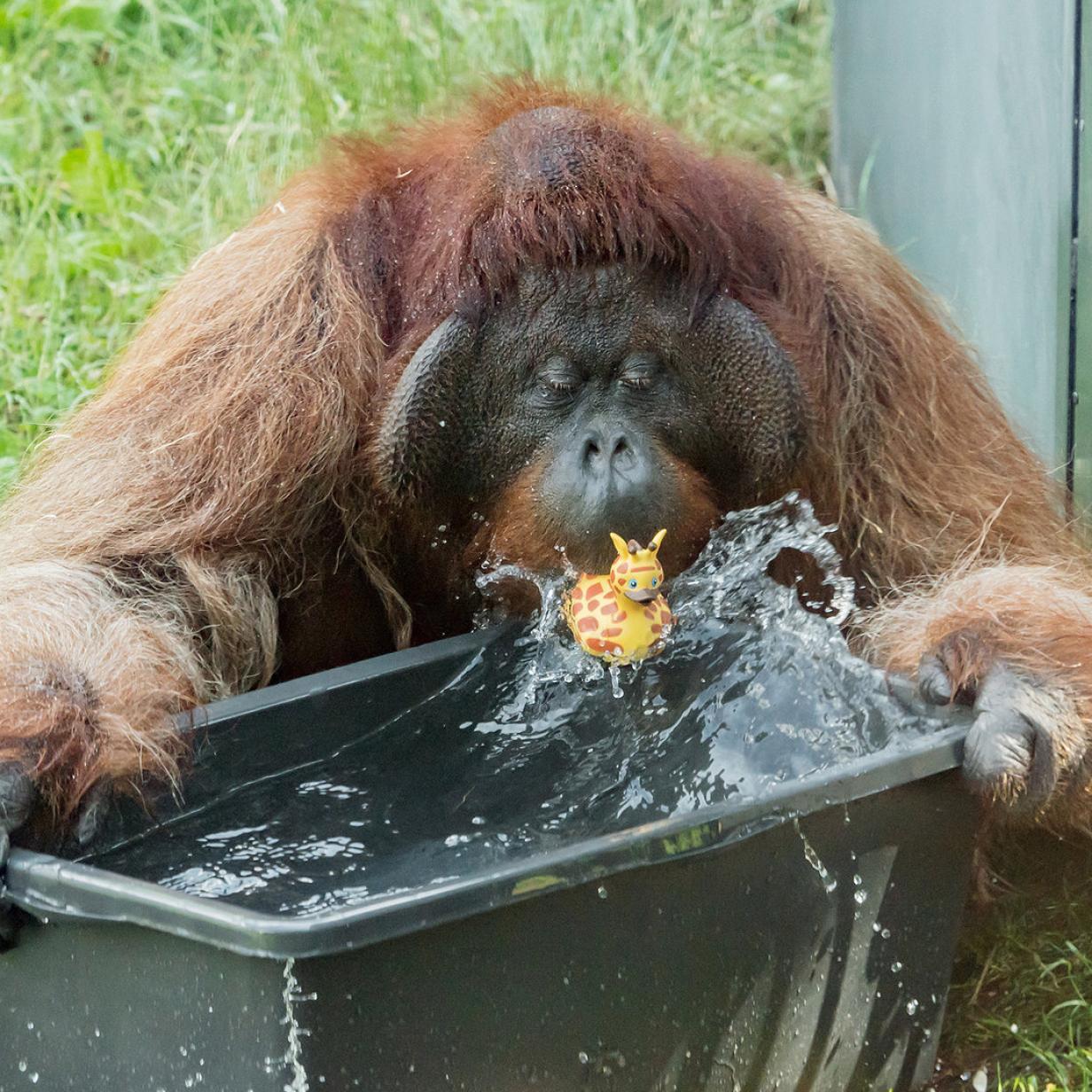 Affenhitze in Österreich: Wo es ähnlich heiß ist