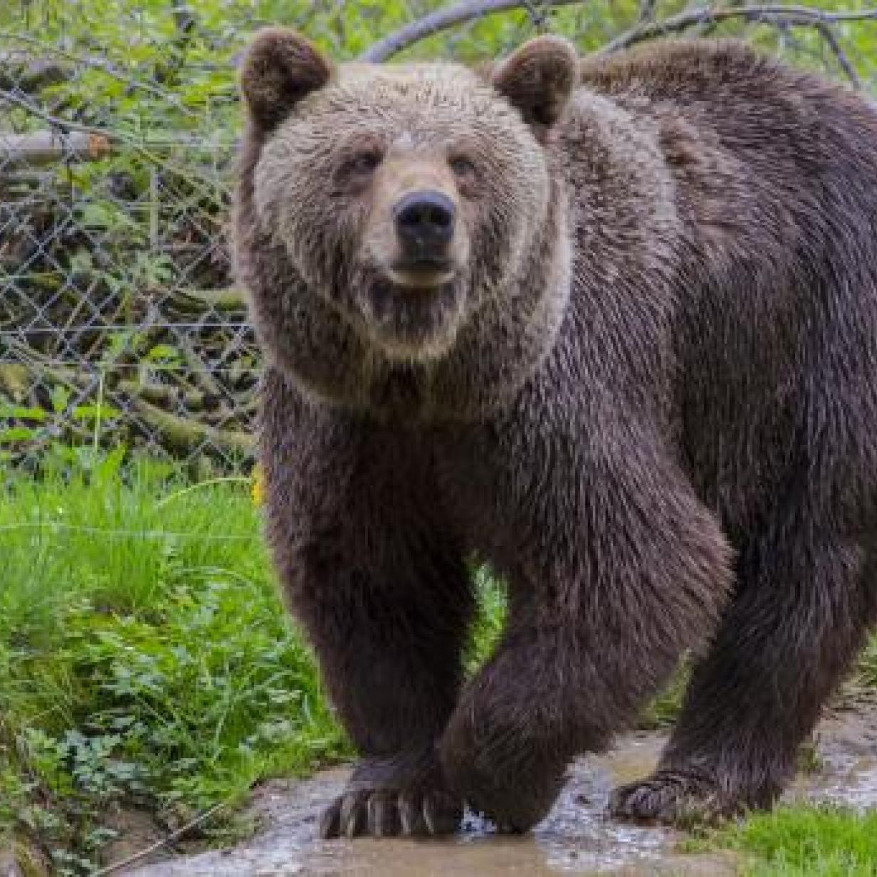 Tirol: Mann sichtete Bär bei Holzarbeiten
