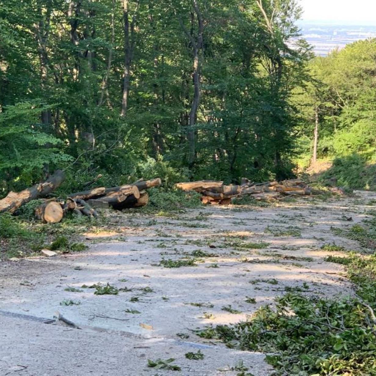 Am Anninger ist die Säge im Einsatz: Ärger über gefällte Bäume
