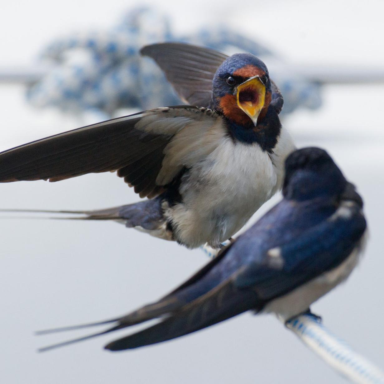 Vögel reagieren nicht schnell genug auf Klimawandel
