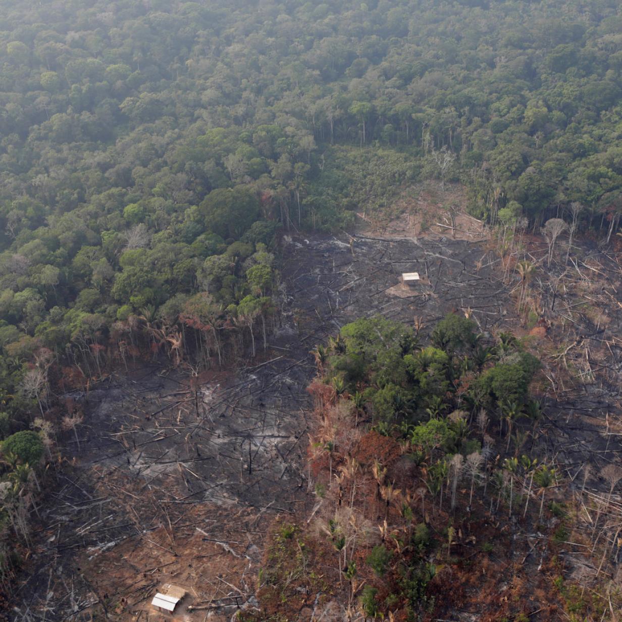 Mercosur: Wie unterschiedlich ÖVP und NEOS die Waldbrände interpretieren