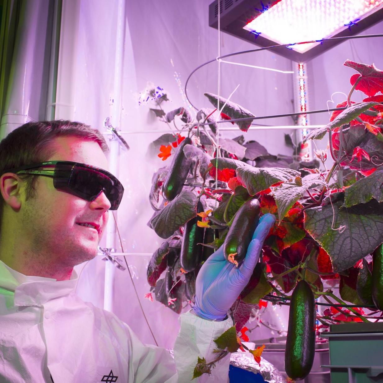 Wie Gemüsezucht im Weltall gelingen kann