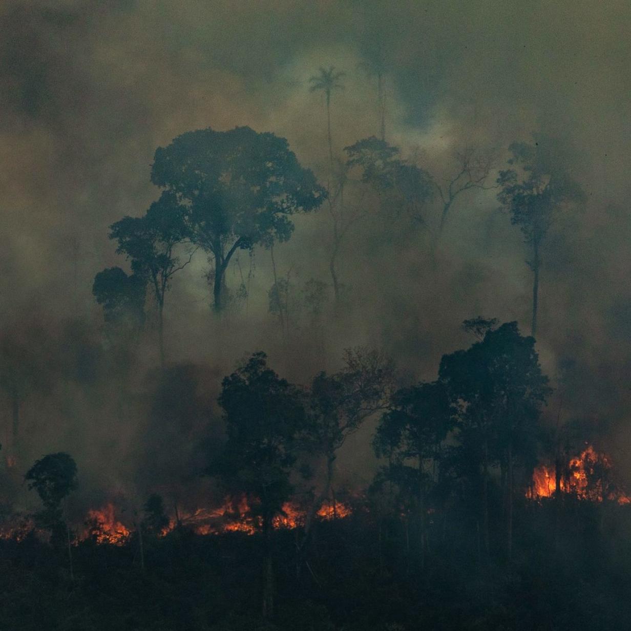 Großkonzerne und Investoren fordern Schutz des Amazonas