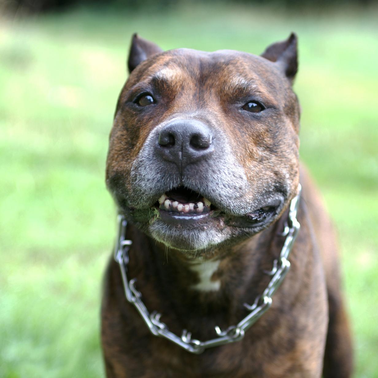 Kärntnerin von Hund angefallen: Halterin bedrohte Zeugen