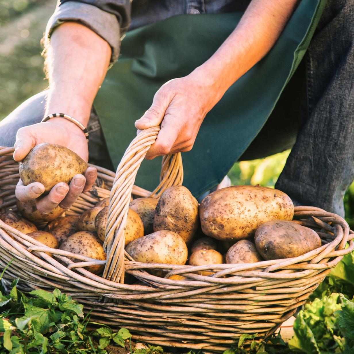 Warum die Österreicher lieber Pommes als Kartoffelsalat essen