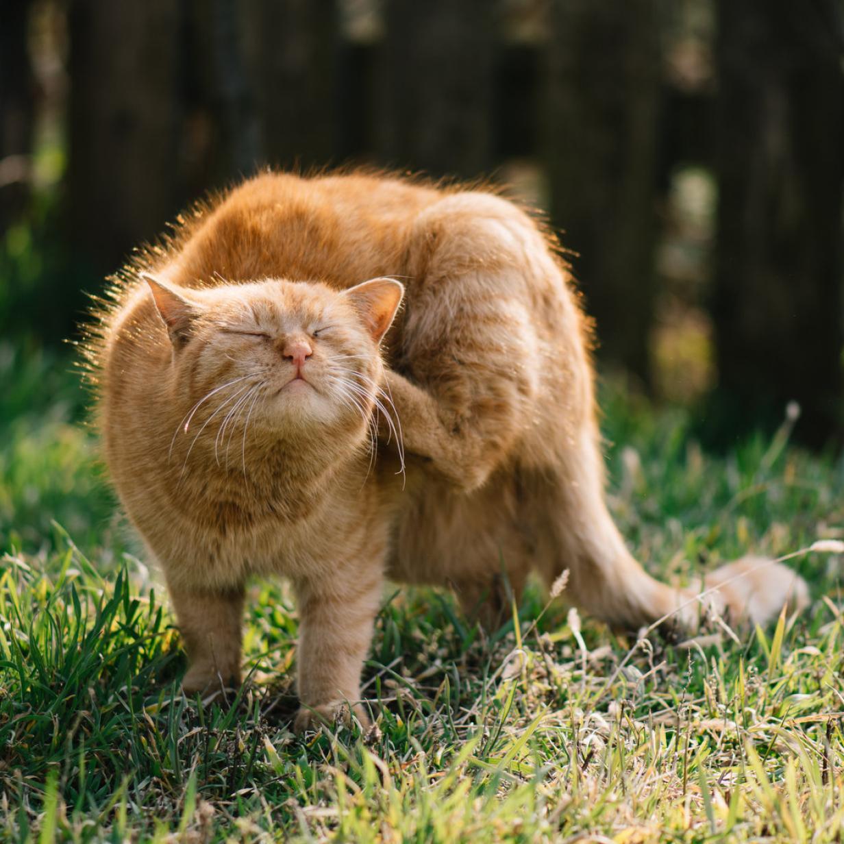 Tiercoach: Worauf Katzen allergisch reagieren