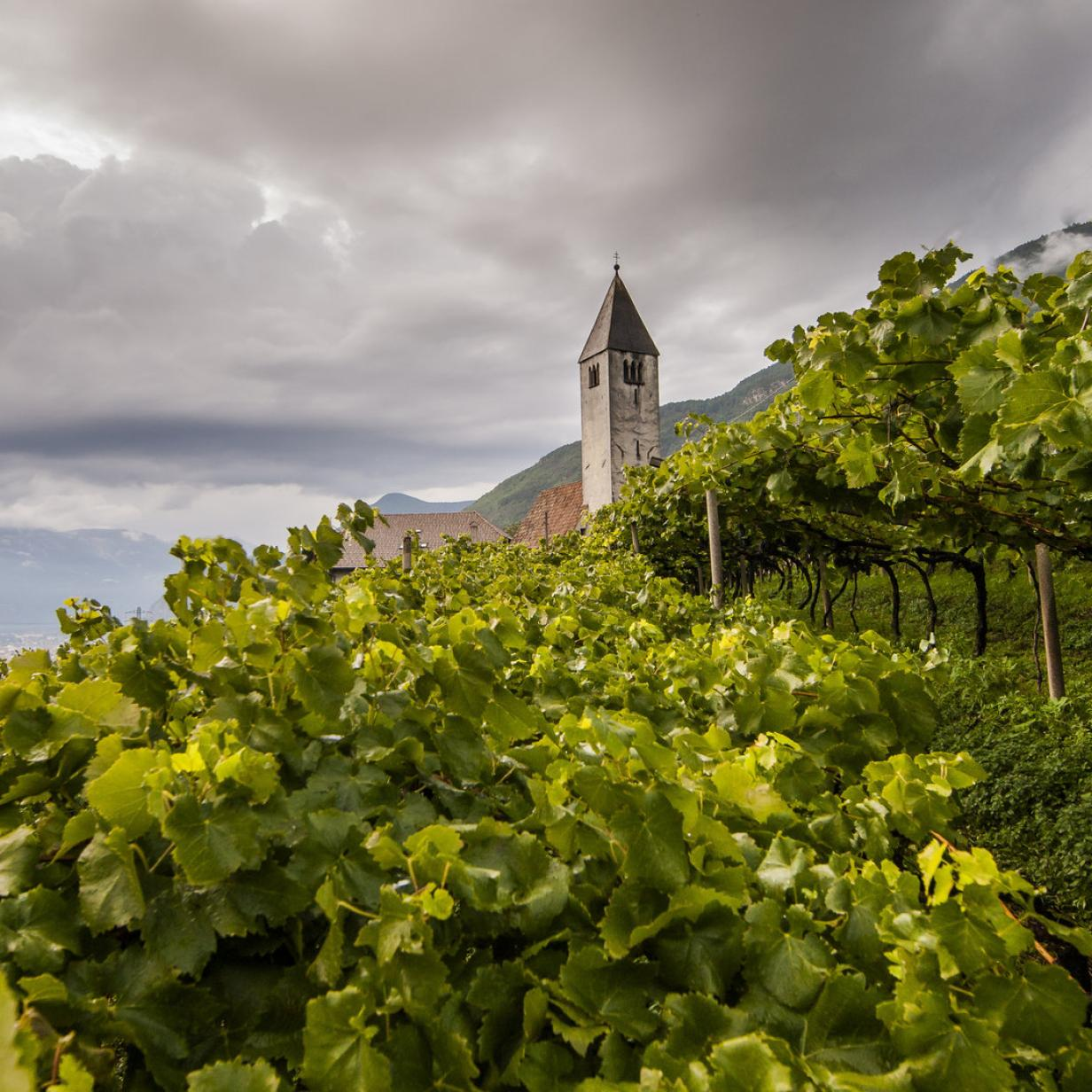 Zwischen Trauben und Lauben: Herbstsonne und Törggelen in Bozen