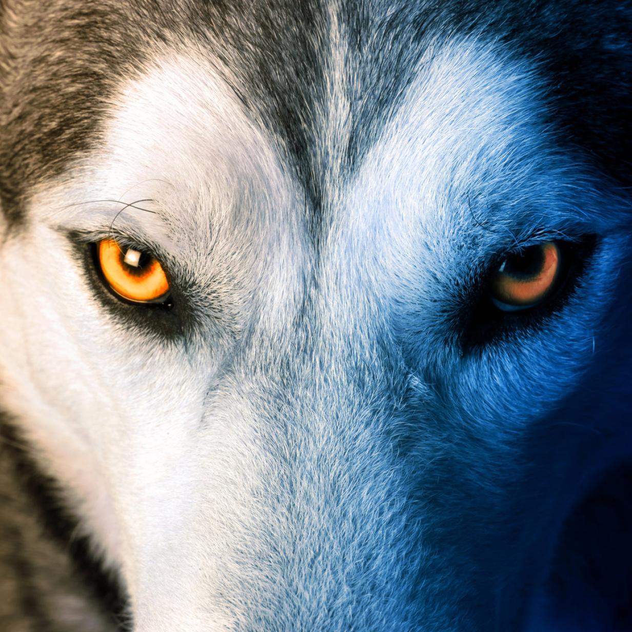 Auf literarischen Wolfsspuren durch die Wachau: Die besten Tipps rund ums Wochenende!