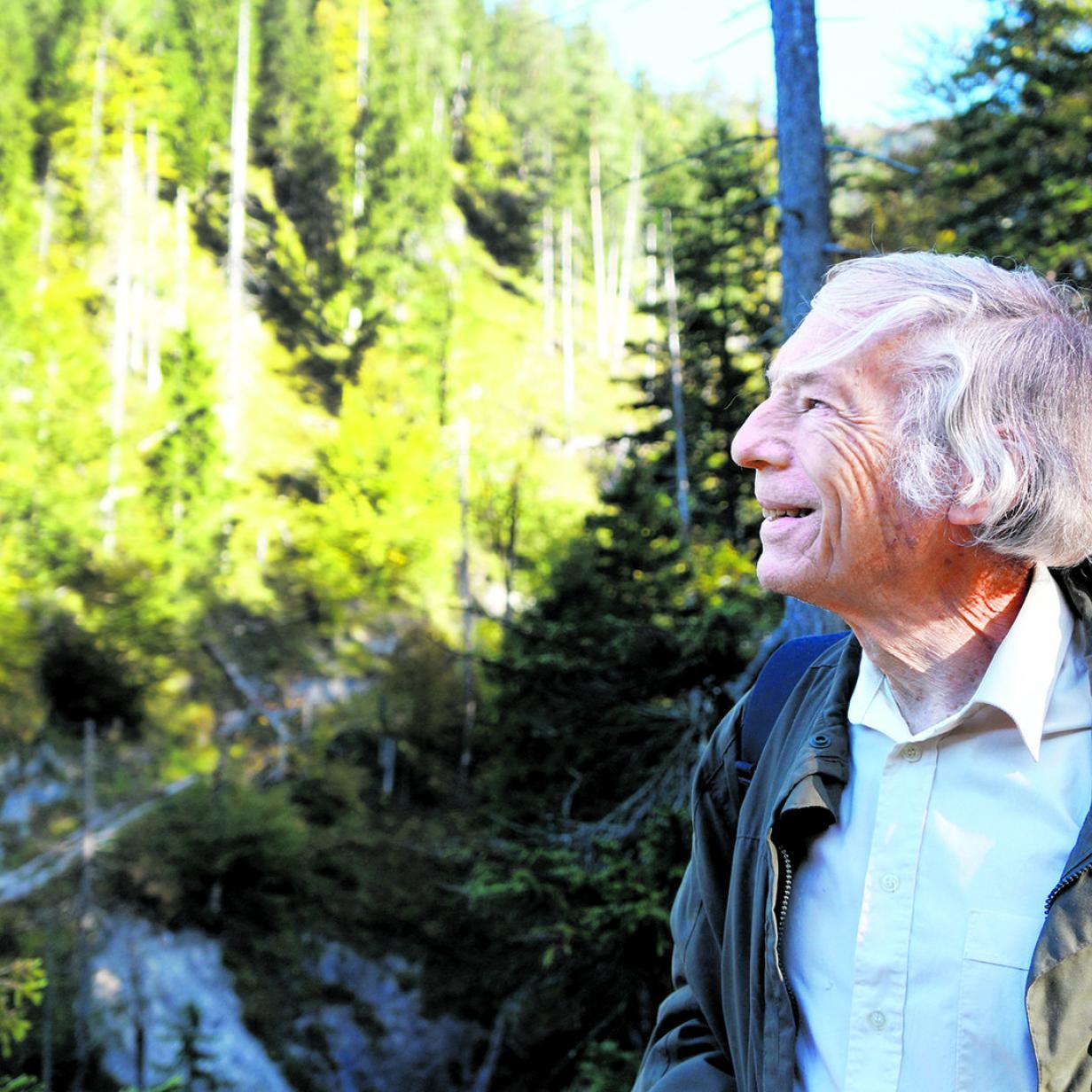 Aus Wald wird Baugrund: Experte hält Gegenreferat