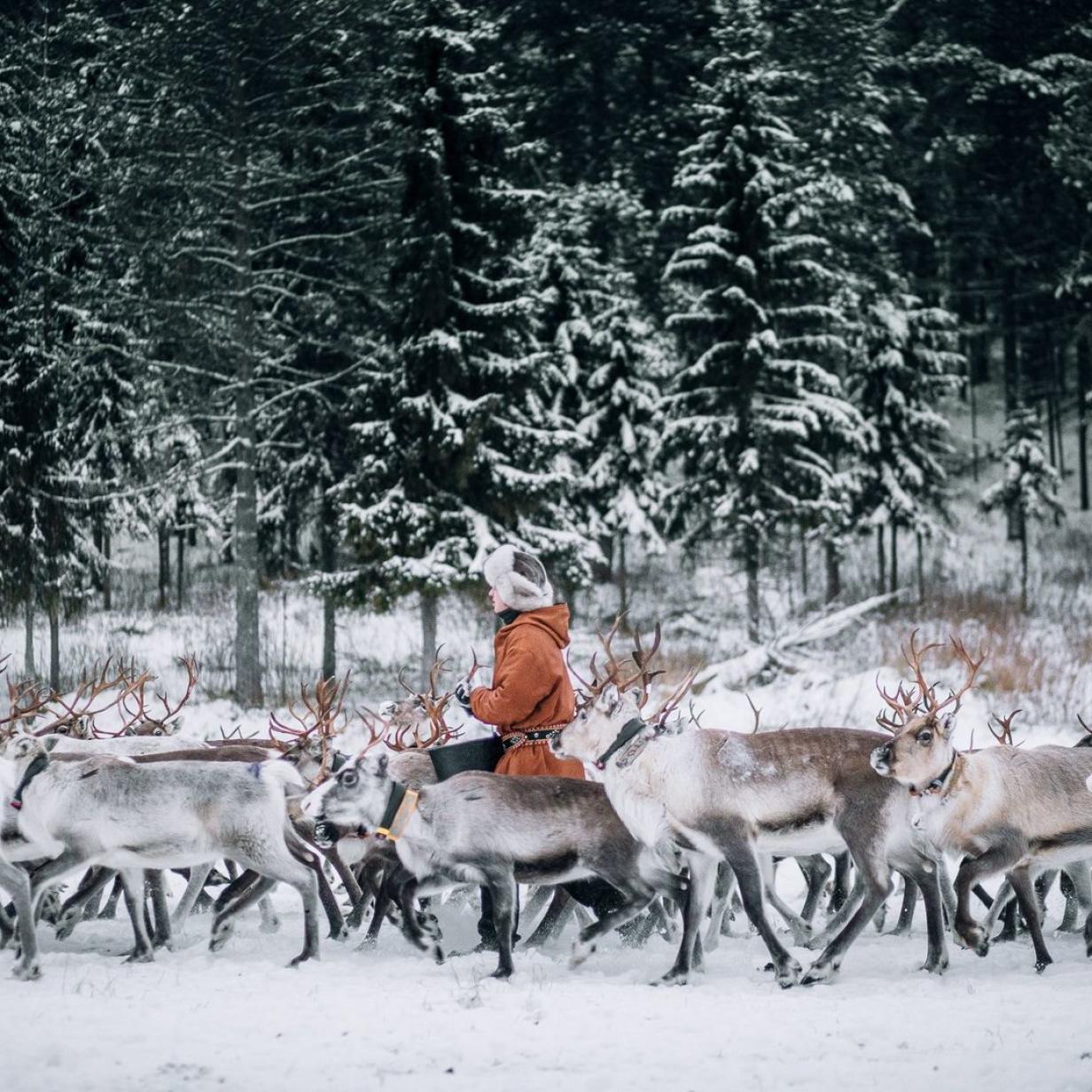 Eisklettern, Ski-doo und Rauchsauna : Winter-Abenteuer in Lappland