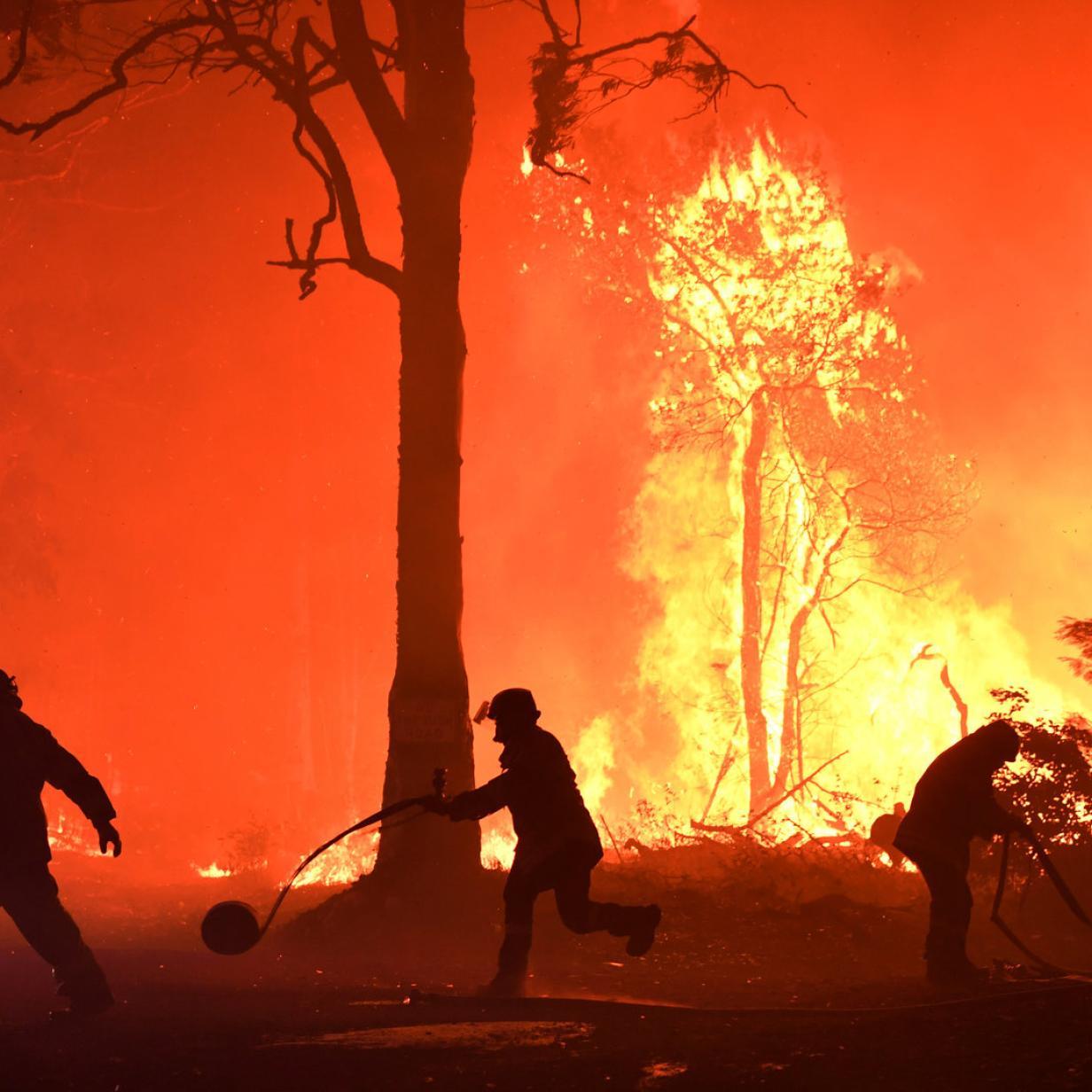 Gigantische Buschfeuer: Feuerwehr ist machtlos