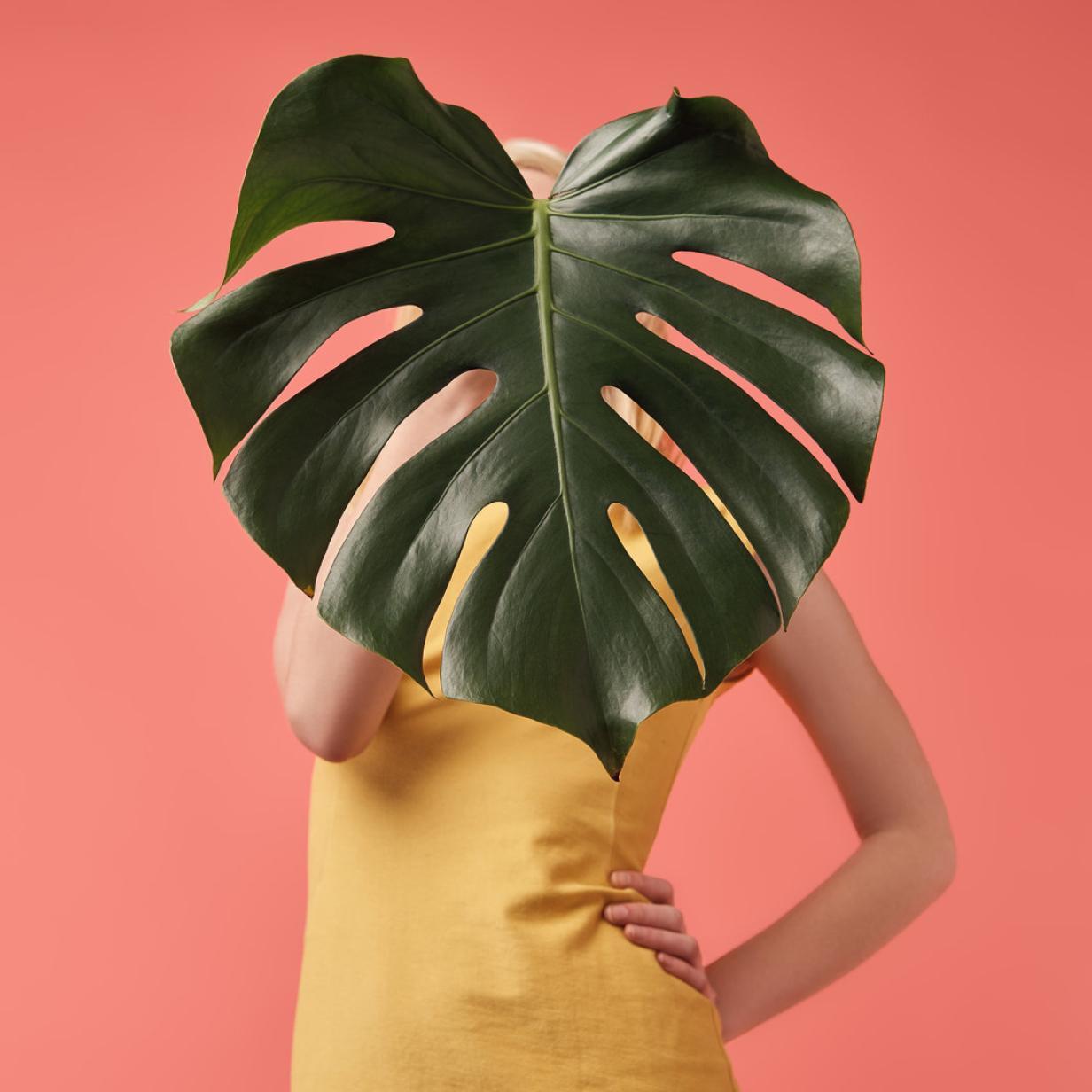 Zu viel Verantwortung: Zimmerpflanzen machen Millennials Angst