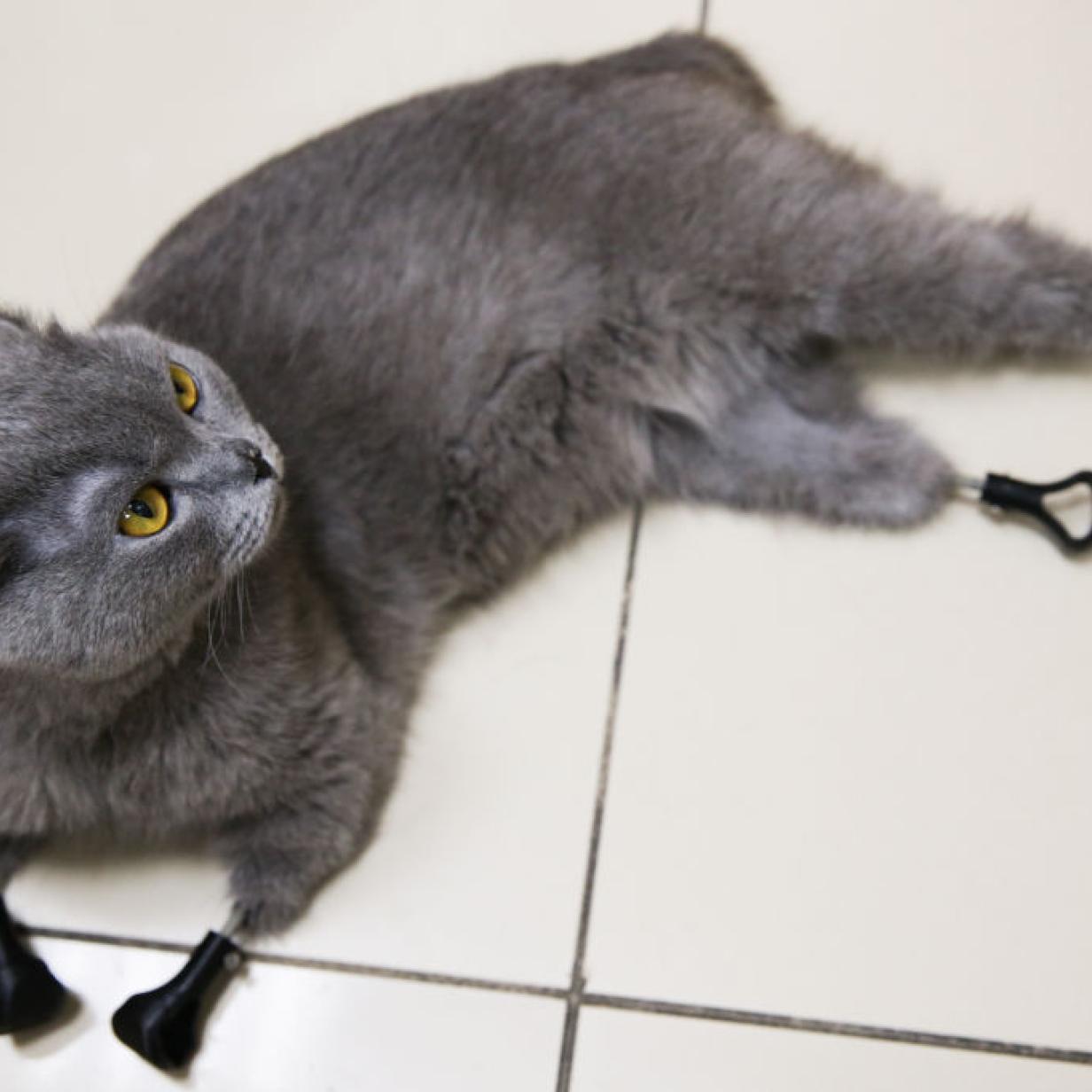 Erfrierungen: Katze Dymka dank Prothesen aus dem 3D-Drucker gerettet