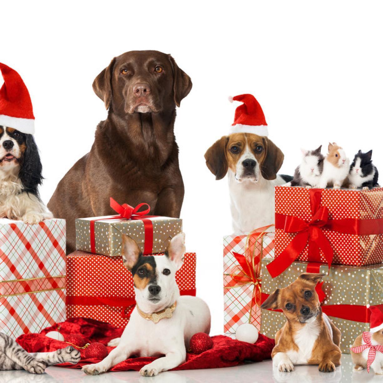 Weihnachtsgeschenke für Haustiere   kurier.at