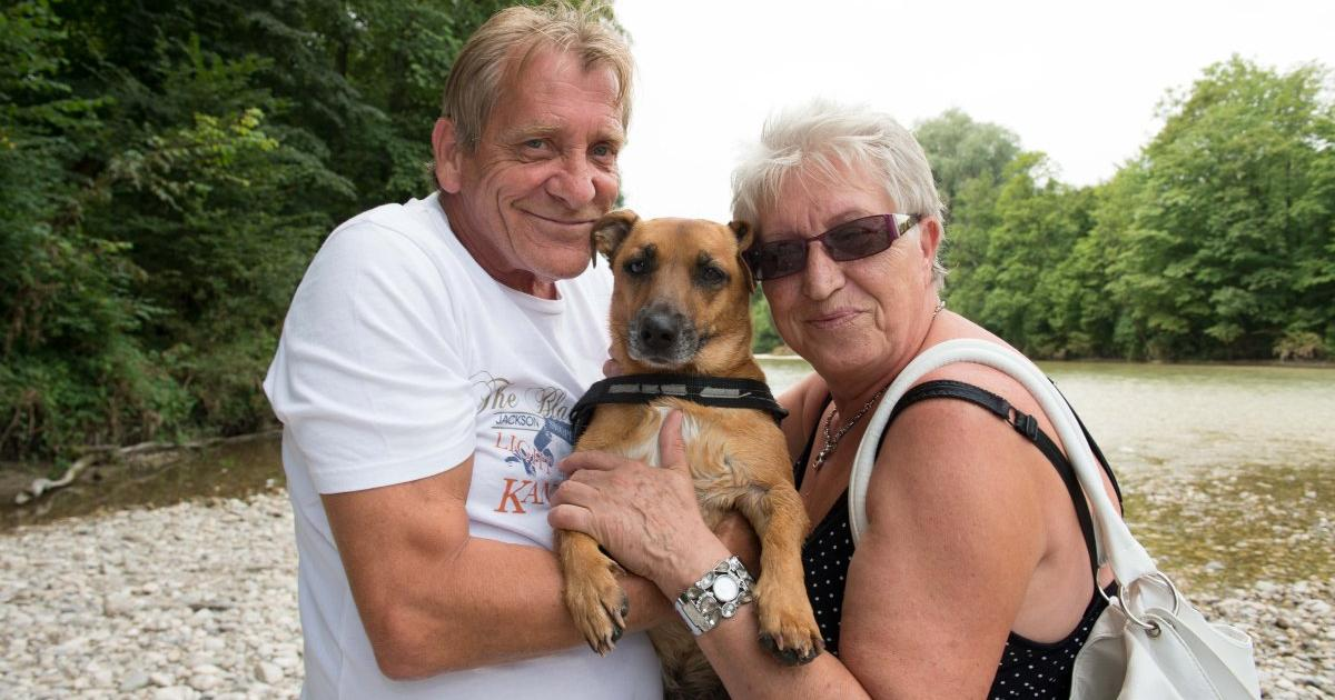 Partnersuche mit hund osterreich