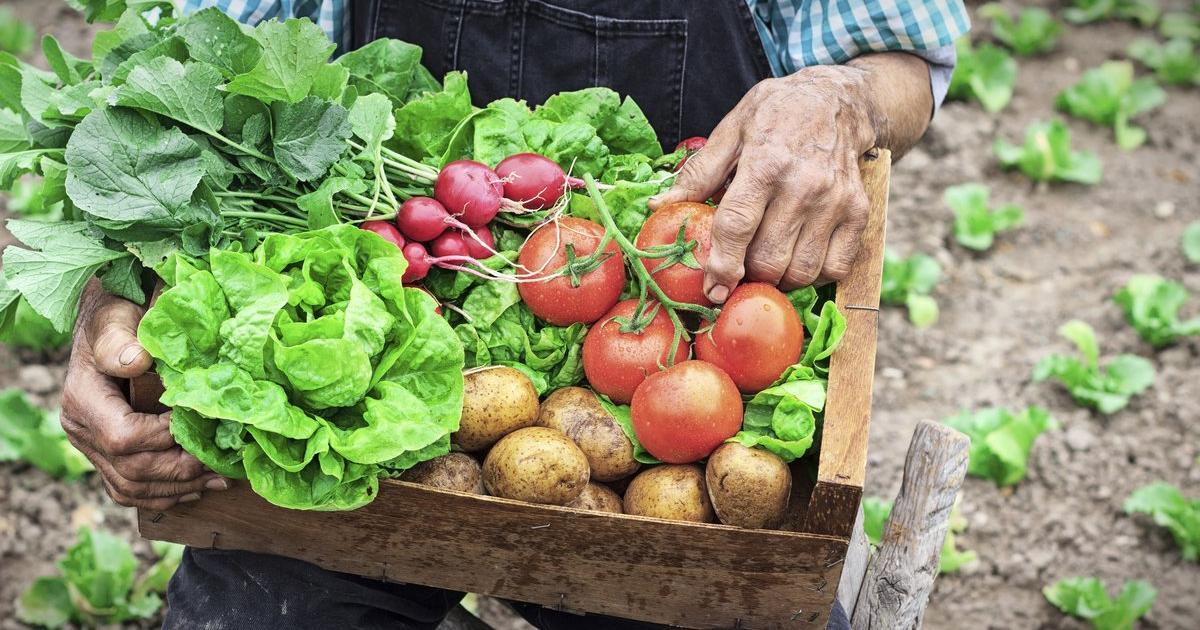 Schnelles Rezept: Ein Salat, der allen schmeckt