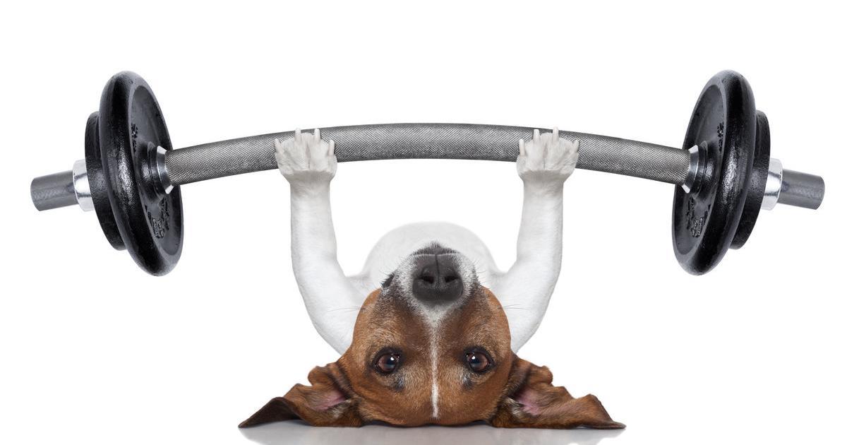 Fitnesstrends