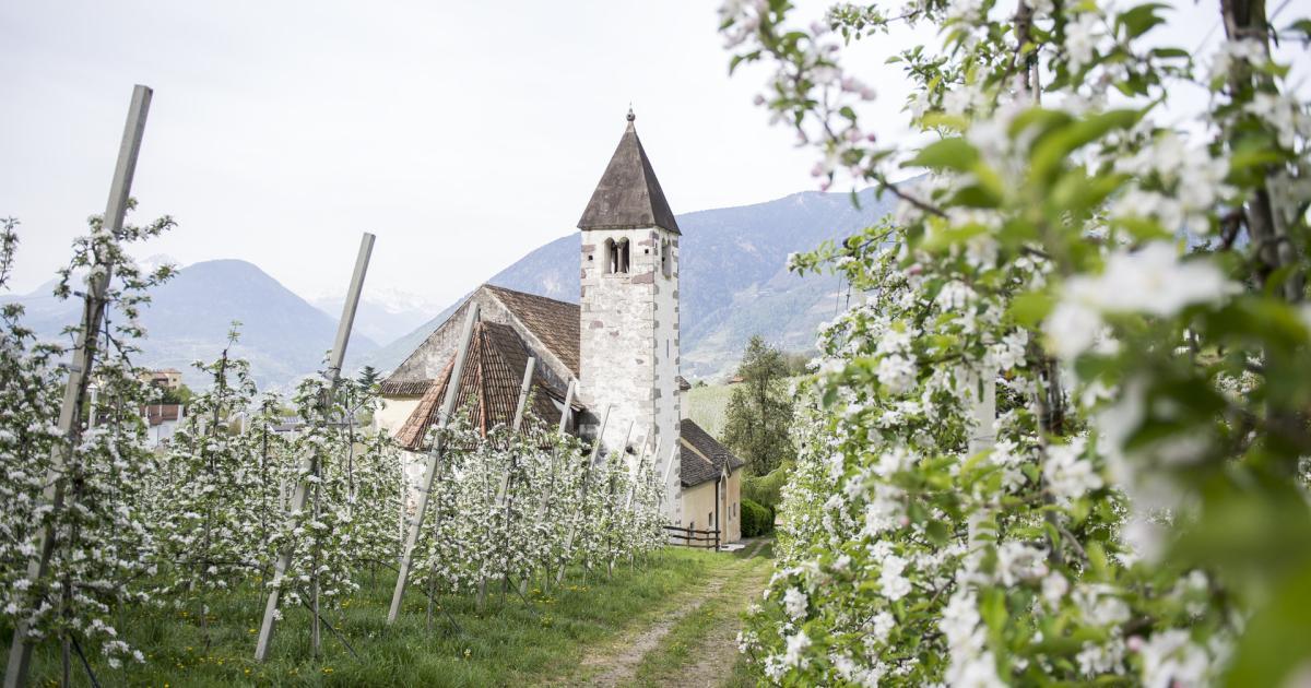 Partnersuche sudtirol meran