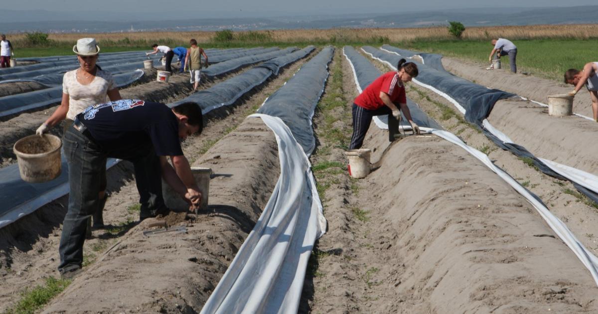 Partnersuche landwirtschaft österreich