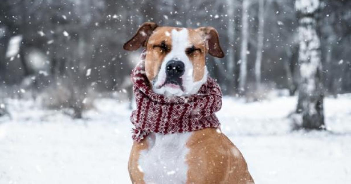 Was Hunden helfen kann, wenn sie krank sind