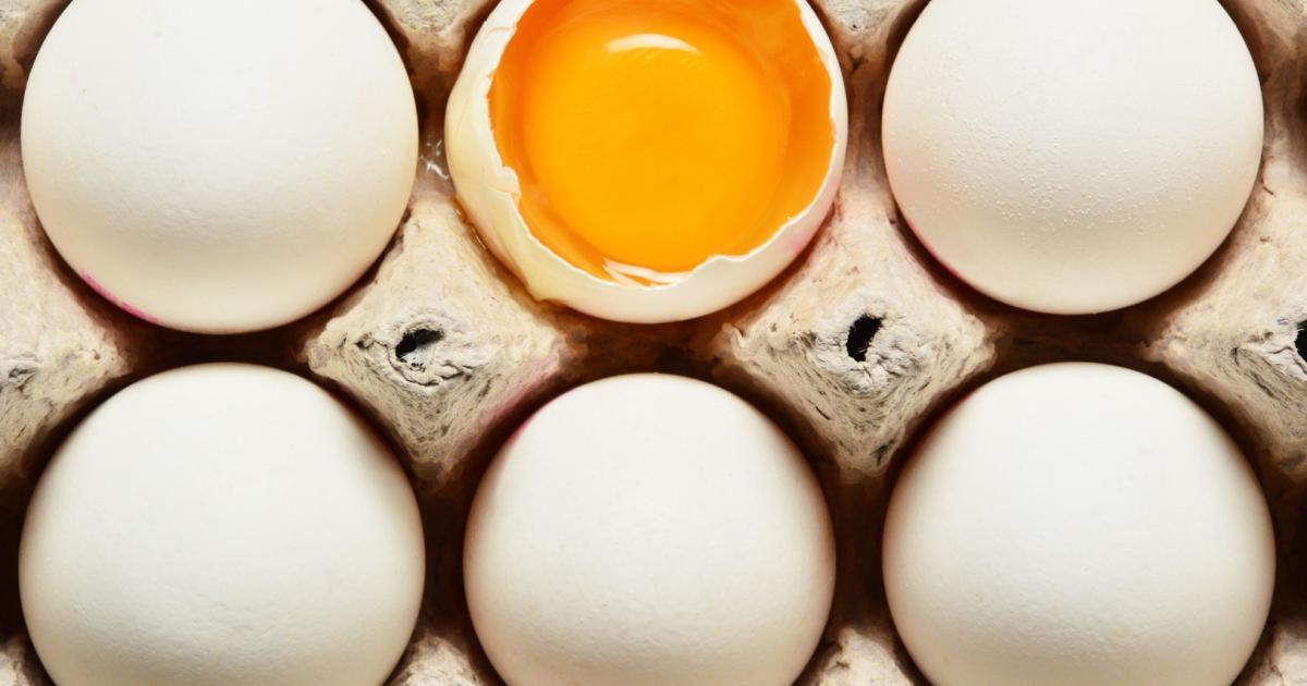 Eierfabrik: Lebenmittelkontrollore fanden keine bedrohlichen Produkte