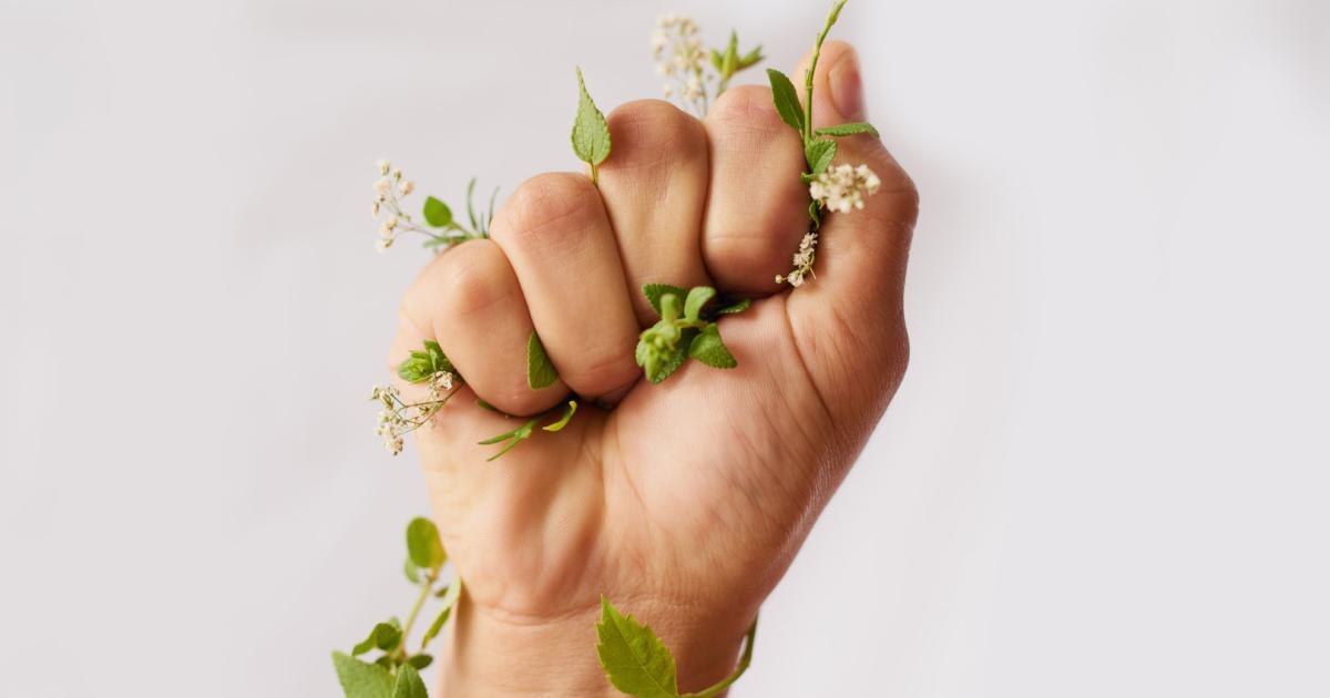 Frauenkräuter: Was bei Regelschmerzen, Milchstau und