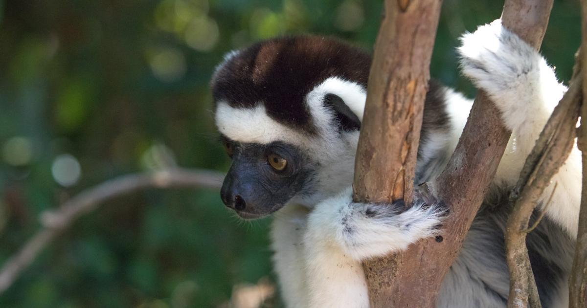 KAESER Partner Madagaskar – KAESER KOMPRESSOREN