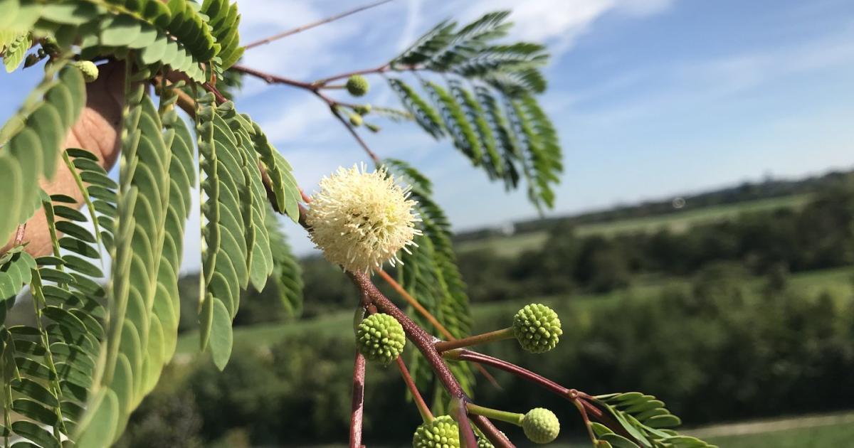 Herbst und Winter: Was bei Balkonpflanzen jetzt zu tun ist